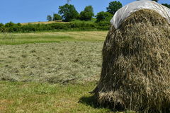 Stocked hay on the meadow Stock Photography