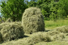Stocked hay on the meadow Stock Photos