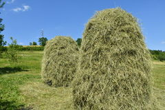 Stocked hay on the meadow Royalty Free Stock Image