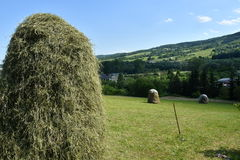 Stocked hay on the meadow Stock Image