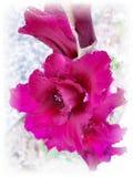 Stockez l'image du Gladiolus sous la pluie Images stock