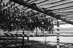 Stockfisch Stockfotografie
