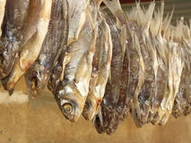 Stockfisch Image libre de droits
