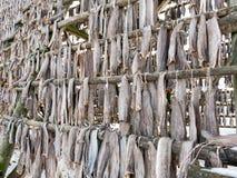 Stockfisch auf Gestell in Svolvaer, Lofoten, Norwegen Lizenzfreies Stockfoto