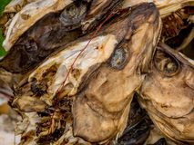 Stockfisch-Köpfe, die hängen, um zu trocknen Lizenzfreie Stockfotos