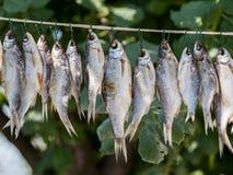 Stockfisch sur la corde Image libre de droits