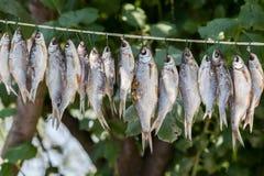 Stockfisch sur la corde Images stock