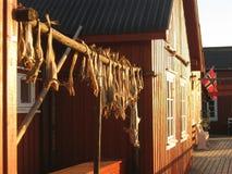 STOCKFISH ΣΕ LOFOTEN, ΝΟΡΒΗΓΊΑ Στοκ φωτογραφίες με δικαίωμα ελεύθερης χρήσης