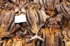 stockfish Immagini Stock