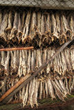 stockfish Royalty Free Stock Photography