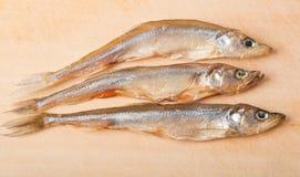 Stockfish Photo libre de droits