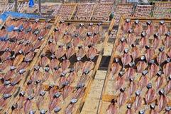 Stockfish Royalty Free Stock Image
