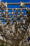 Stockfish stockbilder