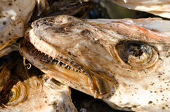 Stockfish Royalty Free Stock Images