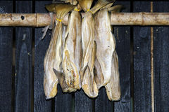 Stockfish Stock Photos