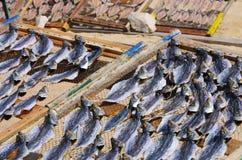 Stockfish Royalty Free Stock Photos