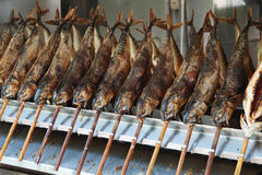 Stockfish Стоковое фото RF