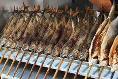 Stockfish Стоковое Изображение RF