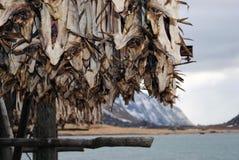 Stockfish Стоковая Фотография RF
