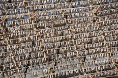 Stockfish Fotografía de archivo libre de regalías