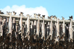 Stockfish against the clouds Stock Photo
