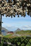 Stockfish in Ballstad, Lofoten, Norway. View to Ballstad and mountains with stockfish on racks, Vestvagoy, Lofoten, Norway royalty free stock images