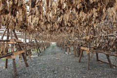 Stockfish Royalty Free Stock Photos