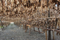Stockfish Stock Images