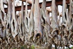 Stockfish del merluzzo Immagini Stock Libere da Diritti
