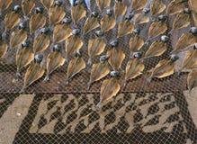 Stockfish Stock Image