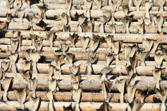Stockfish end. Cod hanging to dry on the traditional wooden  racks, Sakrisoy in  Lofoten islands, Polar circle Royalty Free Stock Images