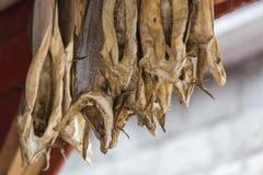 Stockfish hanging to dry Stock Photo