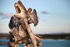 Stockfish heads drying in Norwegian village Royalty Free Stock Photo