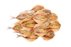 Stockfish isolated on white background royalty free stock images