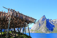 Stockfish and Lofoten's mounts Stock Photo