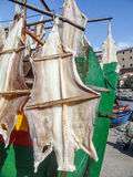 Stockfish in Madeira. Sunny outdoor scenery showing some dried fish in Madeira Stock Images