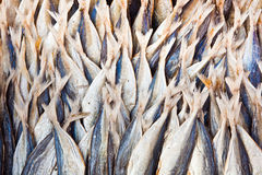 Stockfish at the market Royalty Free Stock Photos