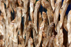 Stockfish on market Royalty Free Stock Images
