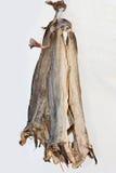 Stockfish. Norvegian dried cod fish Stock Image