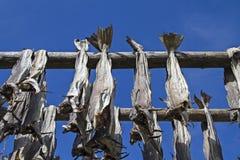 Stockfish racks in Lofoten Stock Photo