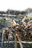 Stockfish racks near  Sakrisoy Stock Photo