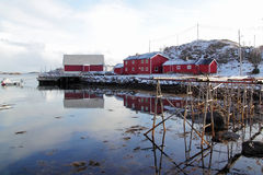 Stockfish  racks  and wooden  red cabins Stock Photos
