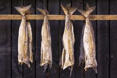 Stockfish is unsalted fish, especially cod, dried by cold air. And wind on wooden racks, seen on the Faroe Islands Stock Image