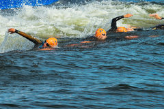 STOCKHOLM - AUG, 24: Just after the start ot the swimming in the Royalty Free Stock Image