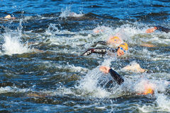 STOCKHOLM - AUG, 25: After the start in the mens swimming in the Stock Photography