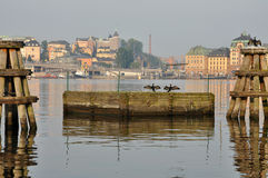 Stockholm birds Royalty Free Stock Image