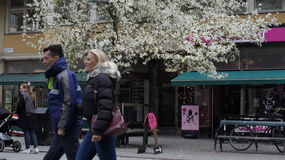 Stockholm in 10 may. Stock Photography