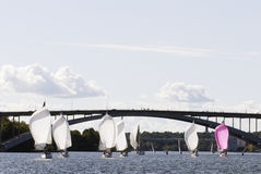 Stockholm sailboat regatta Royalty Free Stock Image