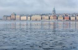 Stockholm strand på en dimmig vintermorgon royaltyfria bilder