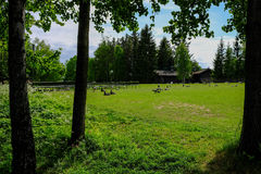 Stockholm, Sweden, Skansen. Village and Geese Stock Photo
